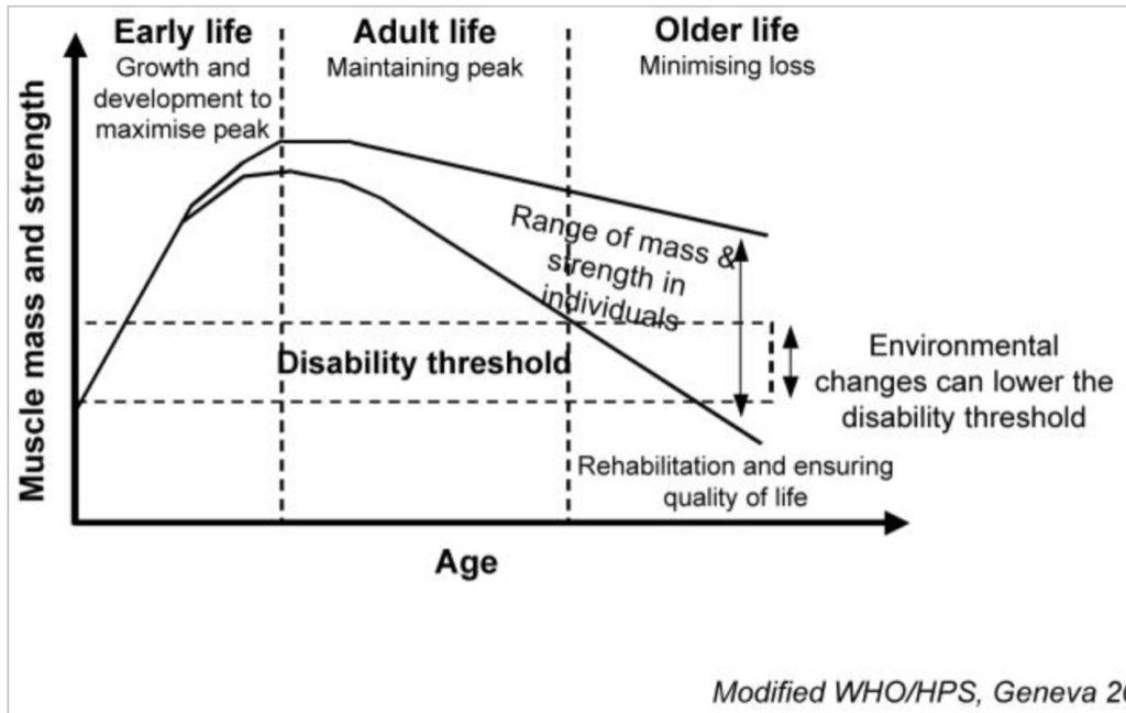 graph of muscle loss with age